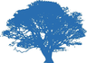 Medium_blue-oak-tree-hi