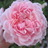 Tiny_1399699594-avatar-peoney702