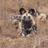 Tiny_1421848914-avatar-cal_c