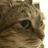 Tiny_1405709812-avatar-wendyn