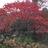 Tiny_1418084867-avatar-jayshapiro
