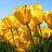 Tiny_1427456470-avatar-autumnn