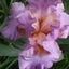 Small_1399362822-avatar-casspra