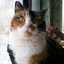 Small_1398861624-avatar-jaycemeadows