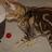 Tiny_1399486886-avatar-reopps
