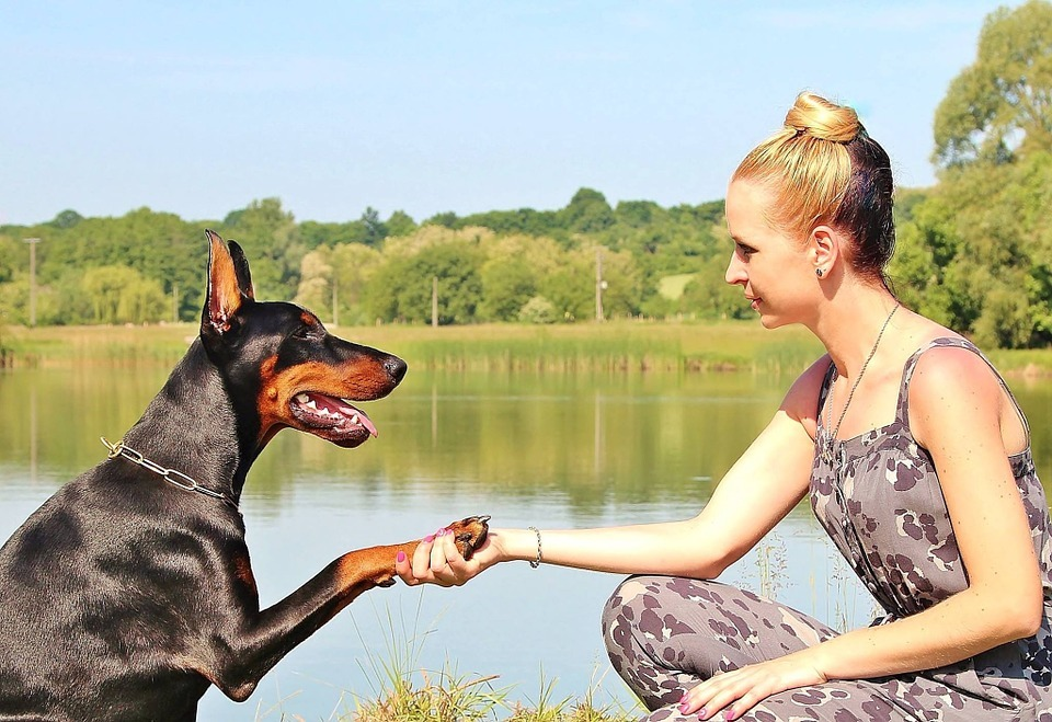 Normal 1462923367 Woman Shaking Dog S Paw 888406 960 720